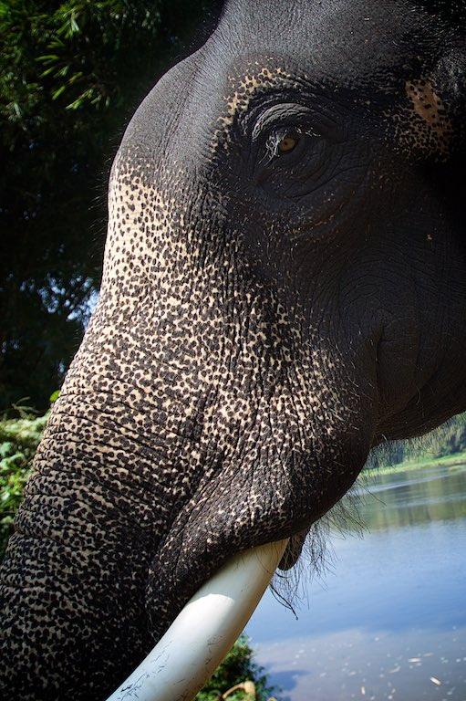 Elephant story 18
