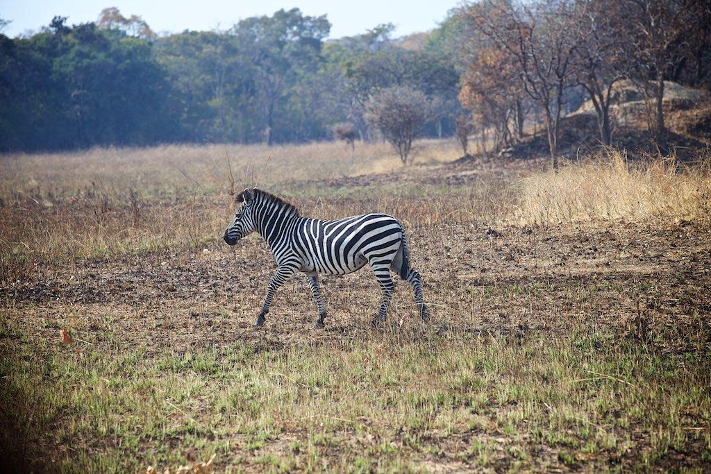 Zambia 12