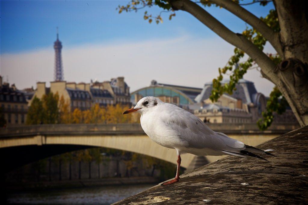 Paris with Carissa 18